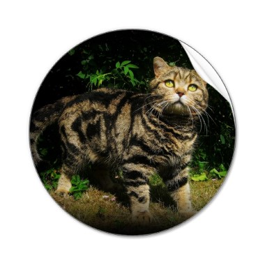 Brown tabby cat sticker