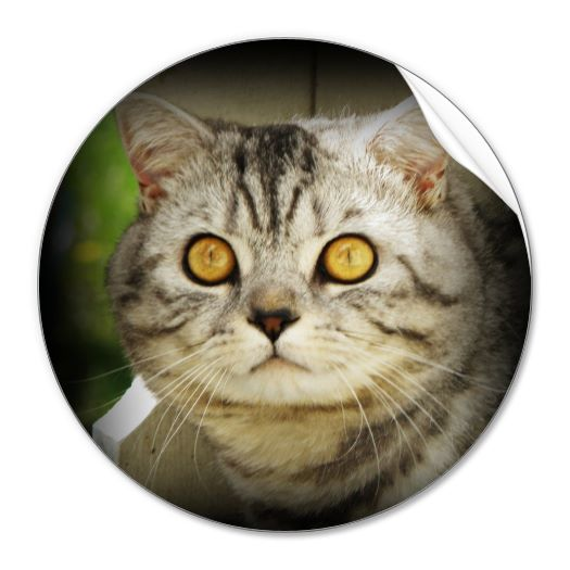 silver_spotted_cat_sticker