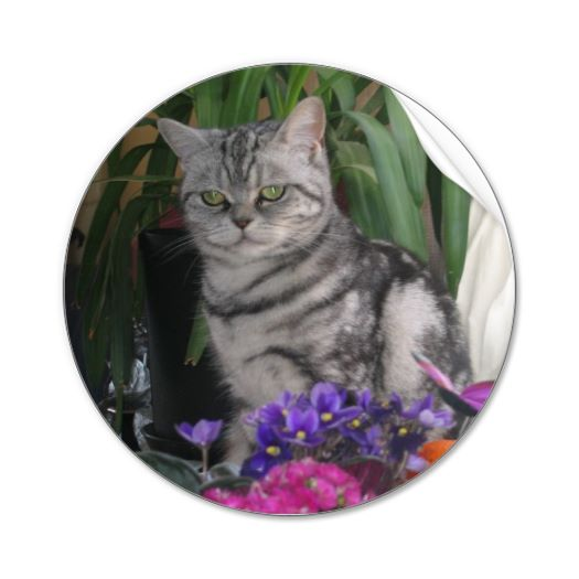 Silver Tabby cat sticker